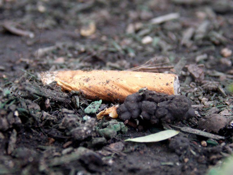 Ellos recolectan colillas de cigarro y las convierten en papel