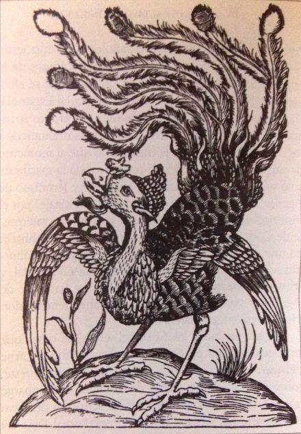 El guajolote, el manjar que México dio al mundo